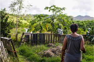 Vincentian farmer among three dead in Barbados