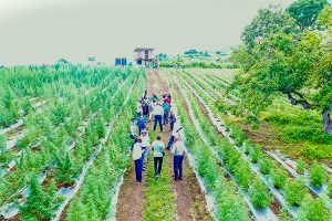 Media given tour of medicinal ganja farms
